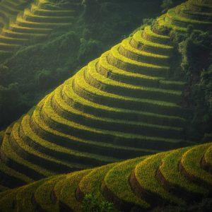 agriculture-1822443_1920.jpg